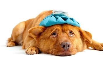 gripe--620x349